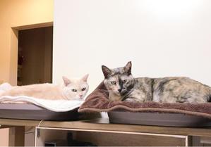 白色と茶色 - 賃貸ネコ暮らし|賃貸住宅でネコを室内飼いする工夫