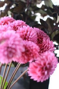 尾張旭アトリエ「中級コースレッスン」のお花。 - 新しい地図~ やまよう篇(アンフィモンフルール)