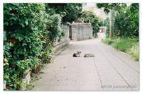 ちび猫ちゃん。 - Yuruyuru Photograph