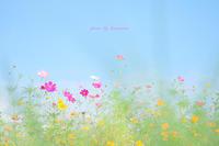 パノラマ遊花の里(静岡県裾野市) - Photographie de la couleur