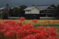 赤い花 - 撮ろ 撮り 撮る 撮れ 撮れば ruchanのフォト遊び