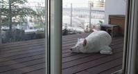 くりしま - 小太郎の白っぽい世界