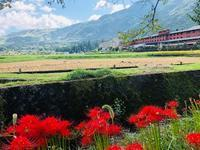 湯布院は彼岸花が咲き誇っています - ホリスティックアロマセラピストカレッジ