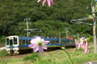 あれー!ひなびた花が - ゆる鉄旅情