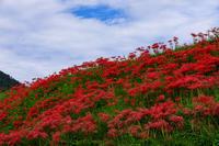 彼岸花咲く里(左京区・大原) - 花景色-K.W.C. PhotoBlog