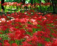 赤い花には緑も似合う? - 星の小父さまフォトつづり