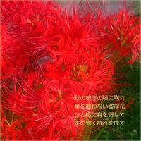炎の如く - m*photopoem