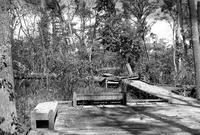 風倒木による木道破壊と放送大学のシナリオ完成 - 照片画廊