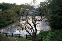 柿の木  湧水池の畔 - エンジェルの画日記・音楽の散歩道