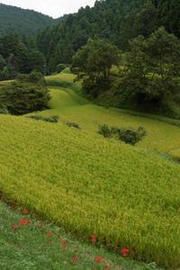 少し早かった彼岸花 - katsuのヘタッピ風景
