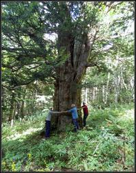 巨木からパワーを頂く - 好い加減に過ごす2