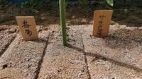 春菊、サラダ菜、サラダミックス、大根の種播き、追加の白菜苗植え - ざっかラボ九隆庵 創作事情
