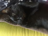 寝たふり - 小 ハル 日和