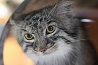 ナイトズー2018~トワイライト・マヌル(埼玉県こども動物自然公園) - 続々・動物園ありマス。