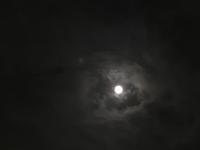 お月見 - sakurairo