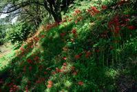 赤と黒蝶 ~1~ - 一歩々々 ~いっぽいっぽ~