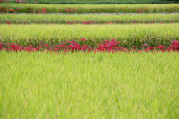 秋の田園風景 - My diary