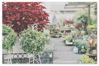 お花屋さんで。 - Yuruyuru Photograph