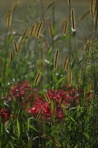 赤い花2 - 撮ろ 撮り 撮る 撮れ 撮れば ruchanのフォト遊び