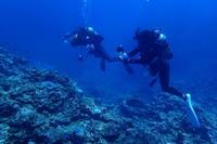 18.9.24シルバーウィーク終盤! - 沖縄本島 島んちゅガイドの『ダイビング日誌』
