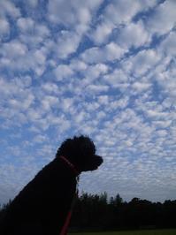 うろこ雲 - ほっとひと息