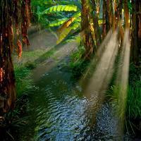 ✔ 上江津湖(水と光と緑…) - チャレンジ! 日々の散歩道