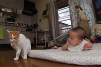 猫と孫 - ぶつぶつ独り言2(うちの猫ら2018)