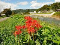 秋の堤防 - 飛騨山脈の自然