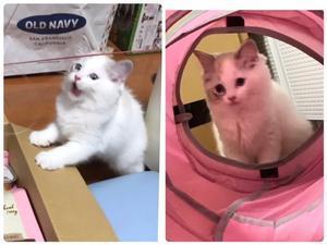アオちゃん&今日のカレンっ子 4姉妹 - Blue Moon  ラグドール
