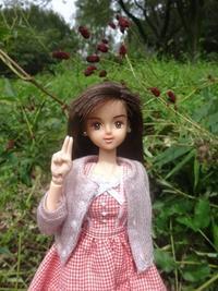 吾亦紅の森の満開の下で - mitsukiのお気楽大作戦