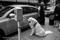 18散歩〜わんこ - 散歩と写真 Fotografia e Passeggiata