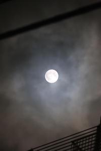 中秋の名月 - れふのマンボウな日々