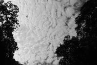 雲 - 漂いながら