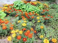 庭の花 - 楽しい わたしの食卓