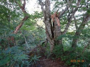 荒島岳勝原コース・復旧作業 - yukoの絵日記