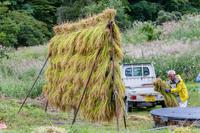 稲刈り完了@松之山 - デジカメ写真集
