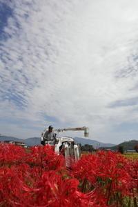 赤い花3 - 撮ろ 撮り 撮る 撮れ 撮れば ruchanのフォト遊び