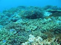 18.9.25無事、台風前にミッションコンプリート - 沖縄本島 島んちゅガイドの『ダイビング日誌』