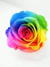 レインボーローズのプリザーブドフラワー花材提供いたします。 - 山梨県プリザーブドフラワー・レインボーローズ専門店『プリザーブドフラワーなないろ』