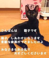 幸せになりました - 八幡地域猫を考える会