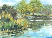 初秋の植物園 - 水々彩々、流れのままに。