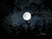 満月に思へば - Miwaの優しく楽しく☆