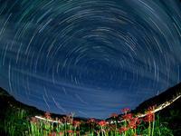 彼岸花と北天の星のグルグル - マッシーの四季折々Ⅱ