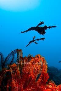 仲良しカップル - Diving Life ~Aita pe'a pe'a~