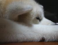 フィットネスしばらくお休み - 秋田犬「大和と飛鳥丸」の日々Ⅱ