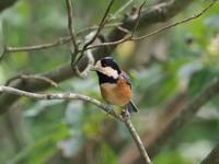 西湖 野鳥の森公園にて - コーヒー党の野鳥と自然 パート2
