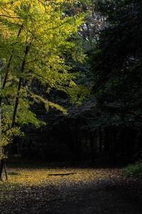 服部緑地公園 開園予定時期 - ナンちゃんの天然色写真&白黒写真