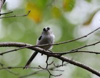 カメラ目線で、、 - ぶらり探鳥