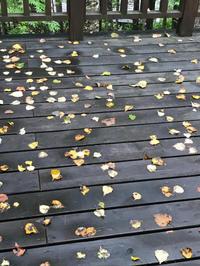 季節の便り - あの日、あの時、あの場所で