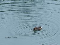 津屋川で鳥 - 瞳の記憶